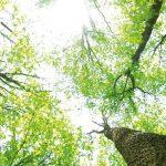 nachhaltigkeit_7_1440x528